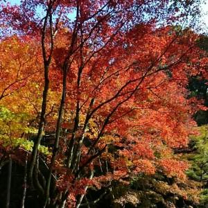 鶏足寺-紅葉-1