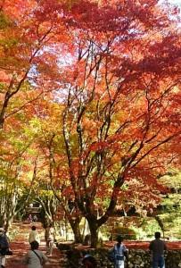 鶏足寺-紅葉-2