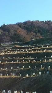 千枚田-3