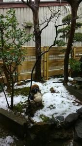 冬景色-1