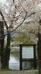 上田城-さくら