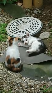 子ネコ遊び-2