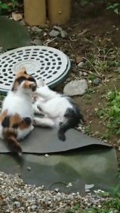 子ネコ遊び-1