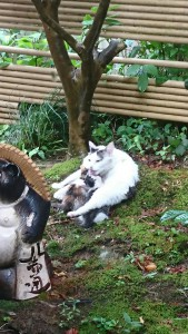 雨上がりのネコ