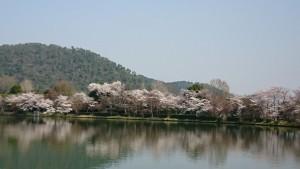 大覚寺-大沢池