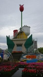 砺波チューリップ-1