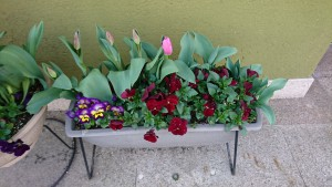 店前花壇-1