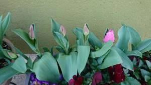 店前花壇-3